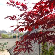 roof garden urban garden guide