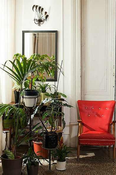 Urban garden guide apartment plants - Good household plants ...